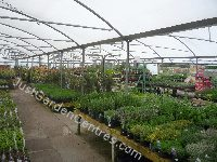 View of David's Nurseries