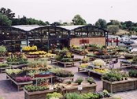 Plants area at Squires Garden Centre, Long Ditton