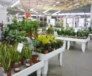 Wide selection of houseplants